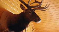 Large trophy elk mount on the wall Stock Footage