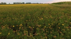 Colorful meadow 4k aerial video Stock Footage