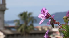 Change of focus from flower to a palm tree Stock Footage