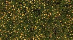 Summer flower meadow 4k aerial video Stock Footage