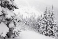 Snowy fir in the mountain - stock photo