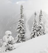 Snowy fir at the mountain - stock photo