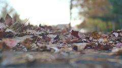 falling leaves autumn fall - stock footage