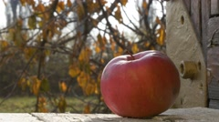 Red apple in autumn scene close Stock Footage