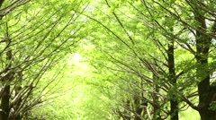 Green leaves in a city park Stock Footage