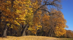 Autumn leaves falling in park - stock footage
