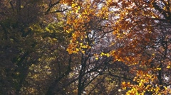 Slow motion of falling autumn leaves - stock footage