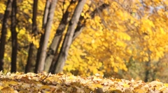 Autumn leaves falling in park Stock Footage