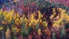 Aerial Footage of a Colorful Autumn Forest Stock Footage