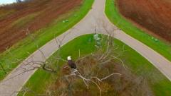 Remarkable Aerial View of Bald Eagle in Treetop Perch Stock Footage
