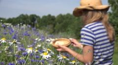 Female herbalist pick daisy flowers between cornflower in summer field. 4K Stock Footage