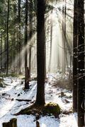 Forest in winter season Stock Photos