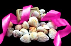Variety of sea and river white shells, natural soap, acid pink ribbon macro i Stock Photos