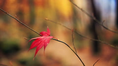 Lonely red leaf with a blurred autumn background. - stock footage