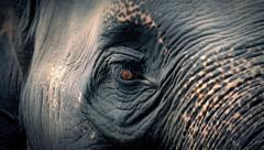 Elephant Head Moving Around With Big Sad Eyes - stock footage