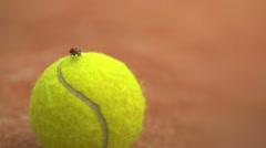 Ladybug on tennis ball – court Stock Footage