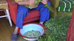 Herbalist grandma pick chamomile flower blooms and tabby cat sleep. 4K Stock Footage
