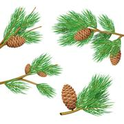 Pine Branches Set - stock illustration