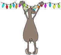 Stock Illustration of Moose hanging Christmas lights