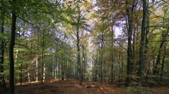 German wood in autumn, leaves are falling down. Stock Footage