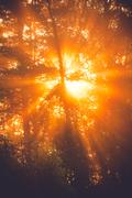 Sunbeams through tree in morning fog  details Stock Photos