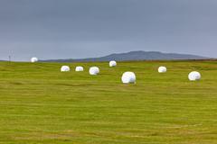 White Hay Rolls at Green Field of Iceland Kuvituskuvat