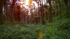 Tropical Forest Wilderness with Sound Stock Footage