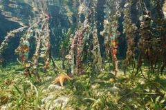 Marine life on the mangrove roots underwater Stock Photos