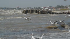 Stock Video Footage of Seagulls on the shore of the stormy sea