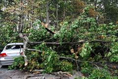 car damaged by fallen tree during storm - stock photo