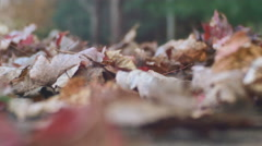 Walking around in leaves autumn fall kentucky walk2 Stock Footage