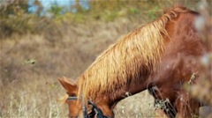 Horse on a summer mountain pasture Stock Footage