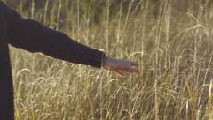 Man Touches Tall Grass, Walks Past Camera Stock Footage