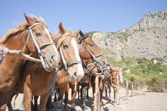 Stock Photo of Brown horses on ranch