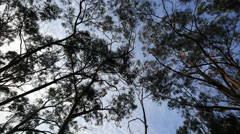 Australia Great Ocean Road gum forest Stock Footage