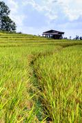 Stock Photo of Terraced rice field with cottage at Ban Pa Bong Piang, Chiang Mai in Thailand