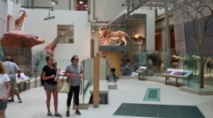 People look at stuffed animals National Museum of Natural History Stock Footage