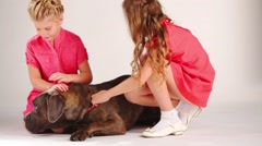 Two pretty girls in red caress dog in white studio - stock footage