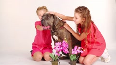 Two pretty girls in red caress dog in white studio with flowers - stock footage