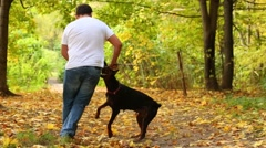 Man in jeans plays with his dog in sunny autumn park Stock Footage