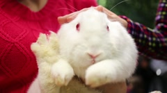 White rabbit on hands of woman and children hands stroke it Stock Footage