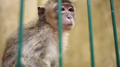 Funny little monkey behind green lattice in small zoo Stock Footage