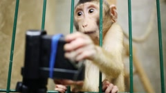 Funny little monkey In cage takes away camera in small zoo Stock Footage