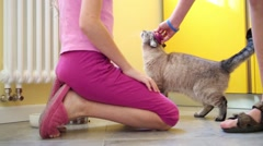 Children legs and cat on floor in apartment. Boy hand combs wool Stock Footage