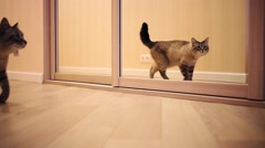 Beautiful cat goes near big mirror on floor in apartment Stock Footage
