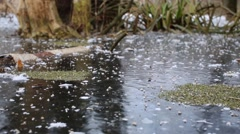 Thick ice with bubbles on frosty autumn day on swamp with moss Stock Footage