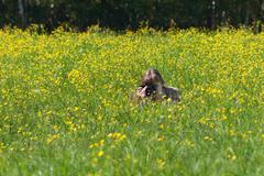 Stock Photo of Young woman shoots among yellow flowers at meadow at summer day