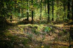 Old World War Trenches In Forest Since Second World War, Belarus Stock Photos