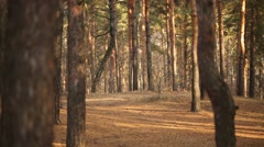 Six half-naked young men run in dry forest at autumn day Stock Footage