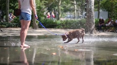 Funny dog with owner plays with fountain at summer day Stock Footage